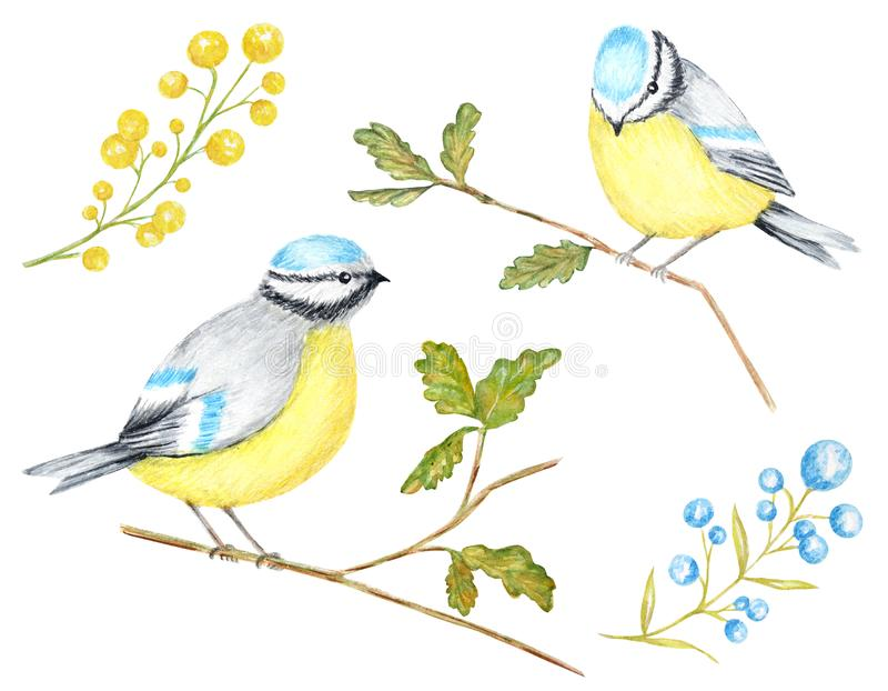 Aquarell-Vögel BlueTit, das auf der Niederlassung, lokalisiert auf weißem Hintergrund sitzt stock abbildung