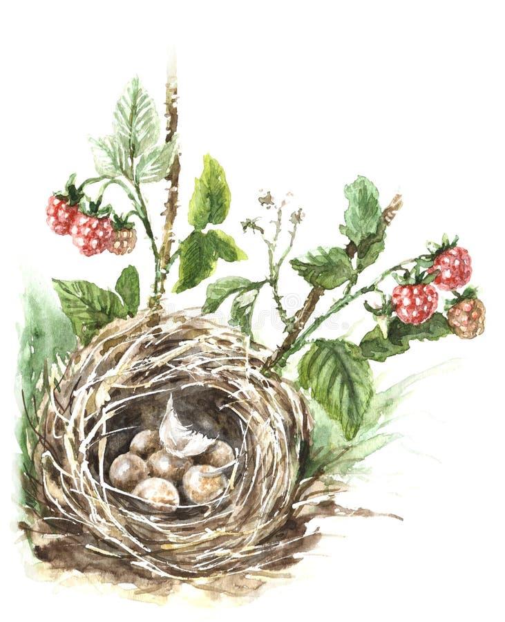Aquarell-Vogel-Nest stock abbildung