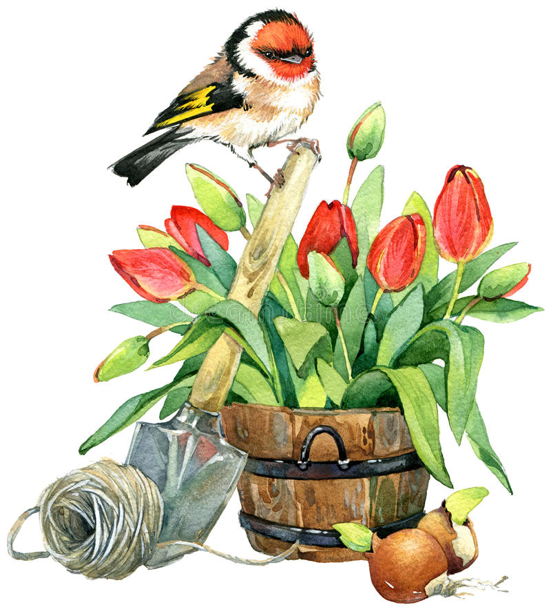 Aquarell-Vogel- und Gartenblumenhintergrund lizenzfreie abbildung