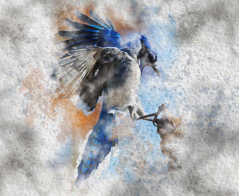 Aquarell Watercolor Bird `Blue Jay Cyanocitta cristata, disambiguation` Painting. Aquarell Vogel stock illustration