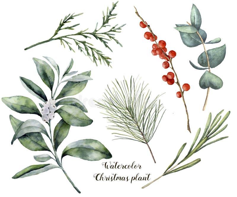 Aquarell-Weihnachtsanlage und -beeren Handgemalter Rosmarin, Eukalyptus, Zeder, Snowberry und Tannenzweige an lokalisiert vektor abbildung