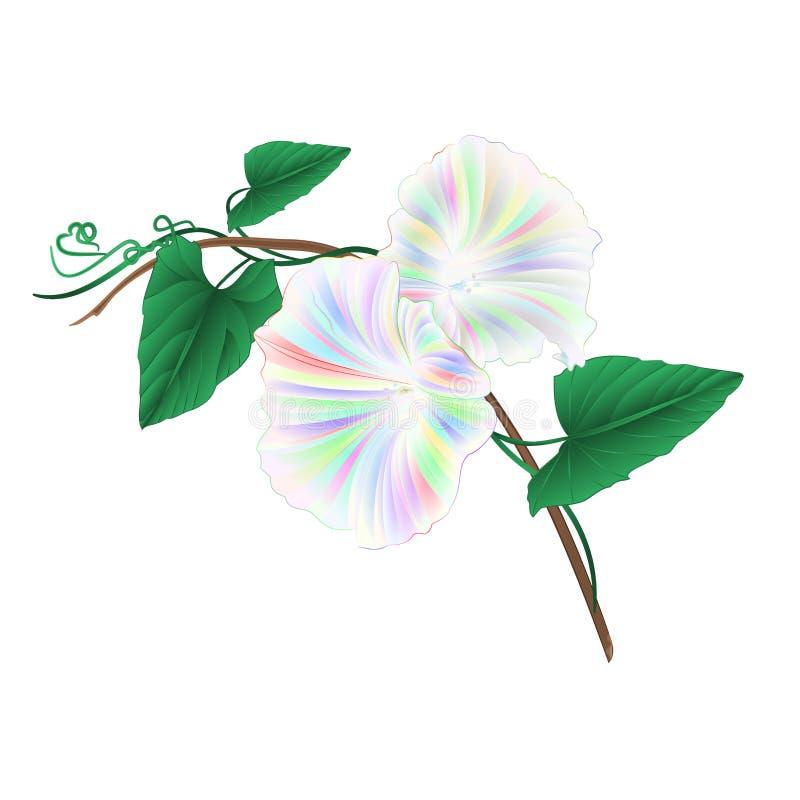 Aquarelle colorée multi de fleur de ressort de gloire de matin sur une illustration blanche de vecteur de cru de fond editable illustration libre de droits