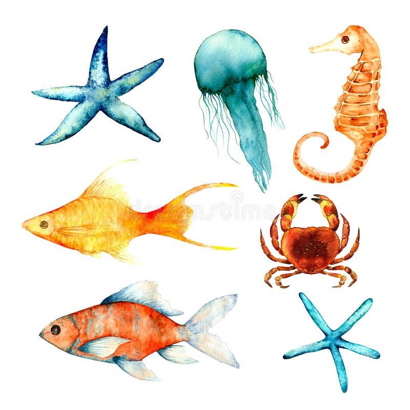 Aquarelle, coraux, ensemble, éponge, océan illustration stock