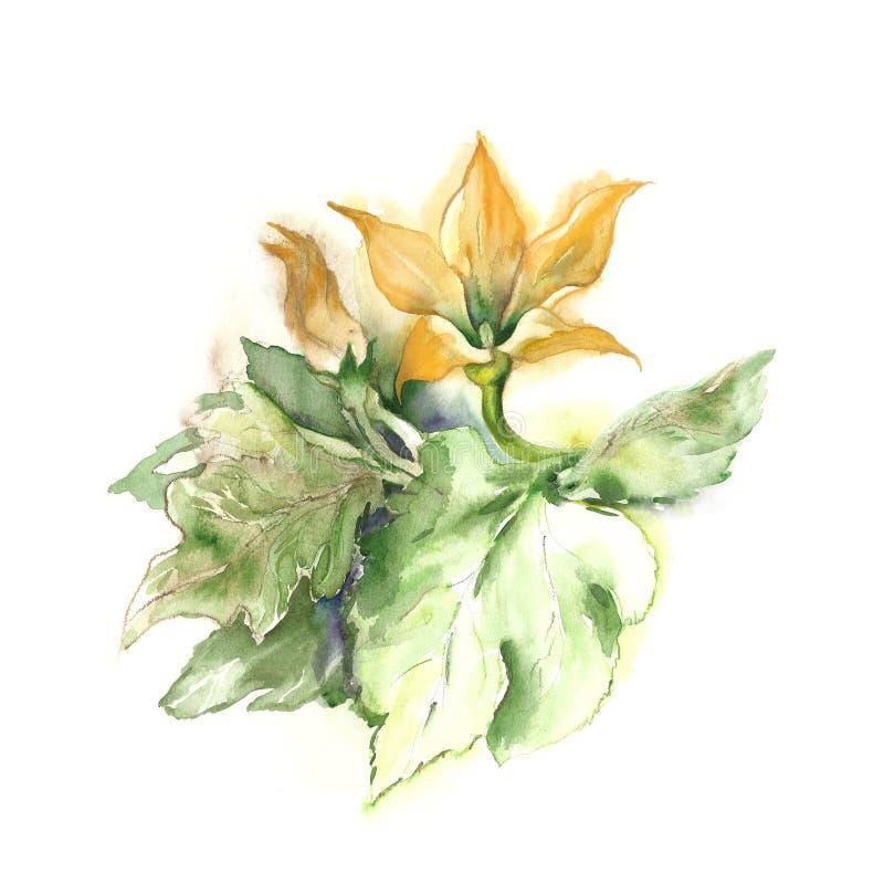 Aquarelle - courgette illustration de vecteur