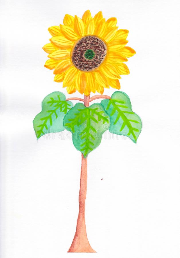 Aquarelle d'aspiration de main d'illustration jaune de tournesol illustration libre de droits