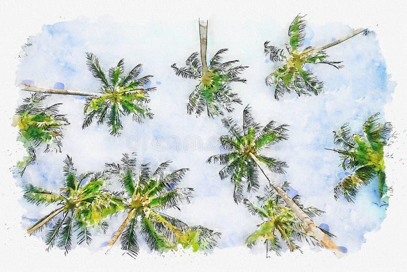 Aquarelle d'illustration de palmier de noix de coco à la vue d'angle image stock