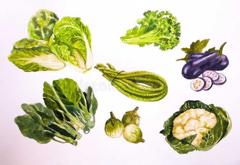 Aquarelle d'illustration de Vegetabl Backgronds image libre de droits