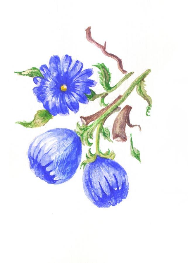 Aquarelle de chicorée illustration stock