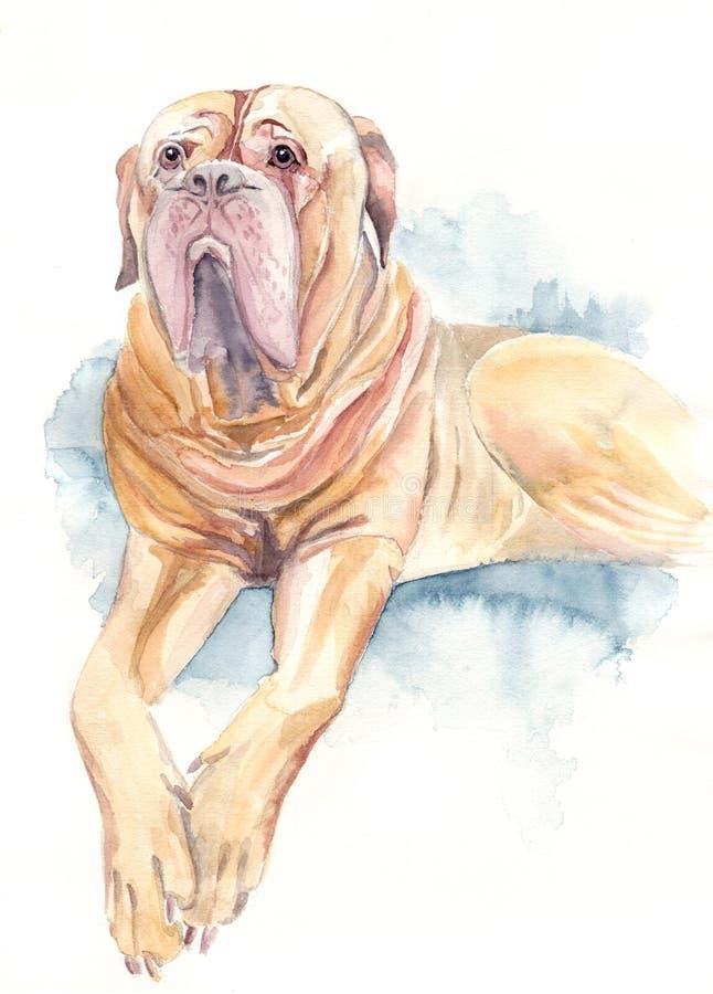 Aquarelle de chien de Bordeaux illustration libre de droits
