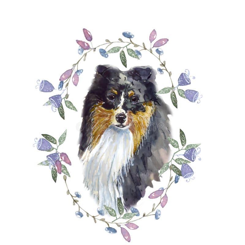 Aquarelle de chien de berger de Shetland illustration libre de droits