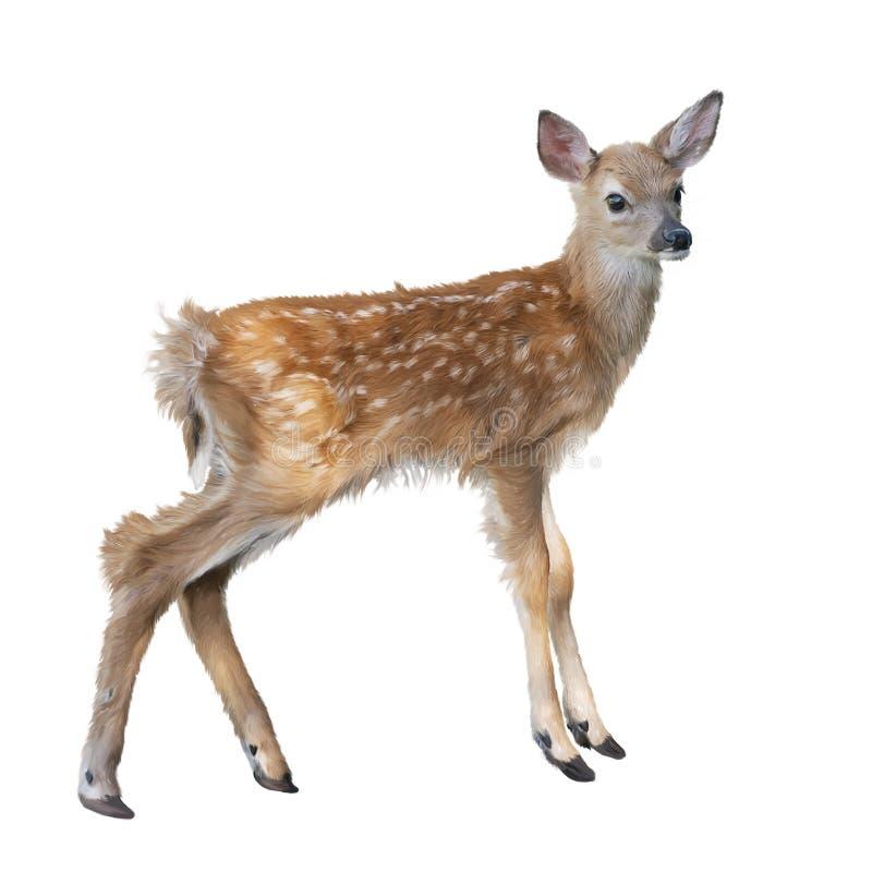 Aquarelle de faon de cerfs de Virginie image libre de droits