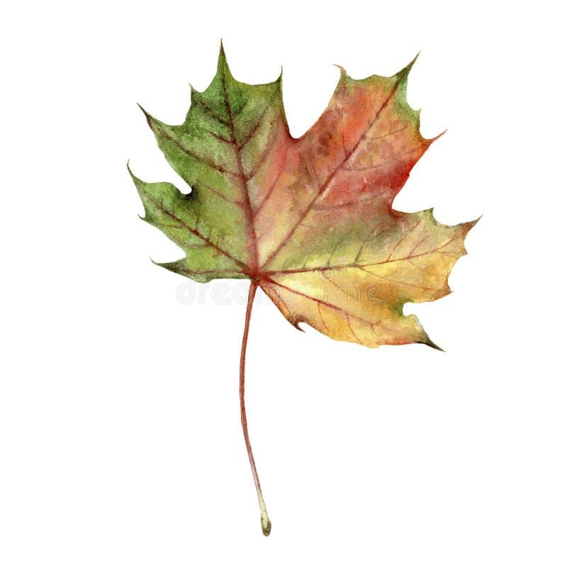 Aquarelle de feuillage d'automne d'isolement sur le fond blanc illustration libre de droits