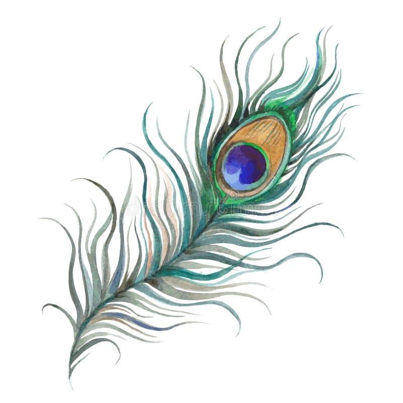 Aquarelle de plume de paon illustration de vecteur