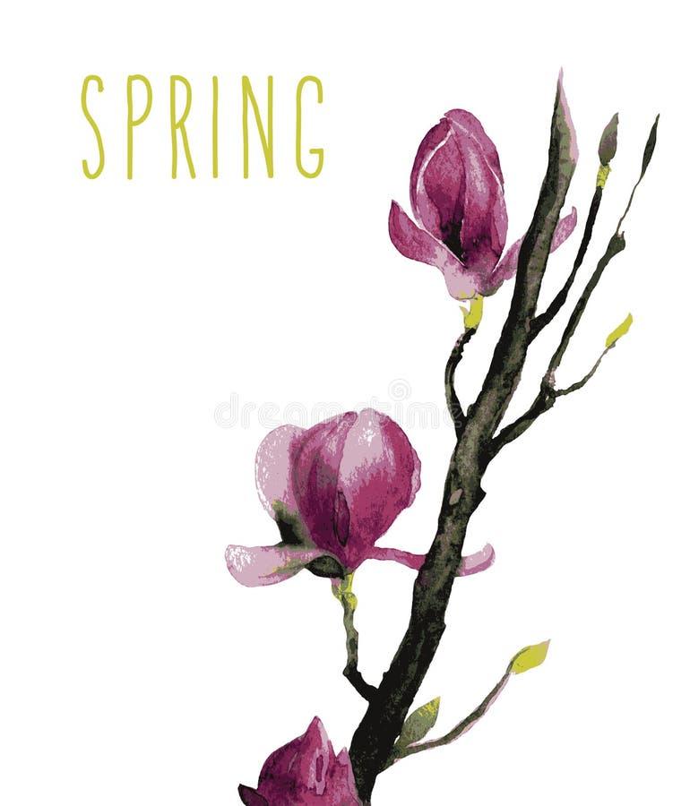 Aquarelle des fleurs de magnolia illustration de vecteur
