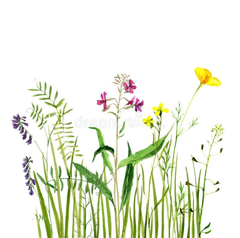 Aquarelle dessinant l'herbe verte et les fleurs illustration libre de droits