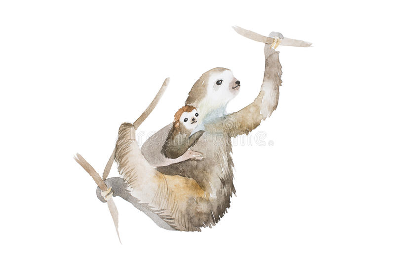 Aquarelle drawing of mother sloth and a baby hanging on tree branches, hand painted illustration royalty free illustration