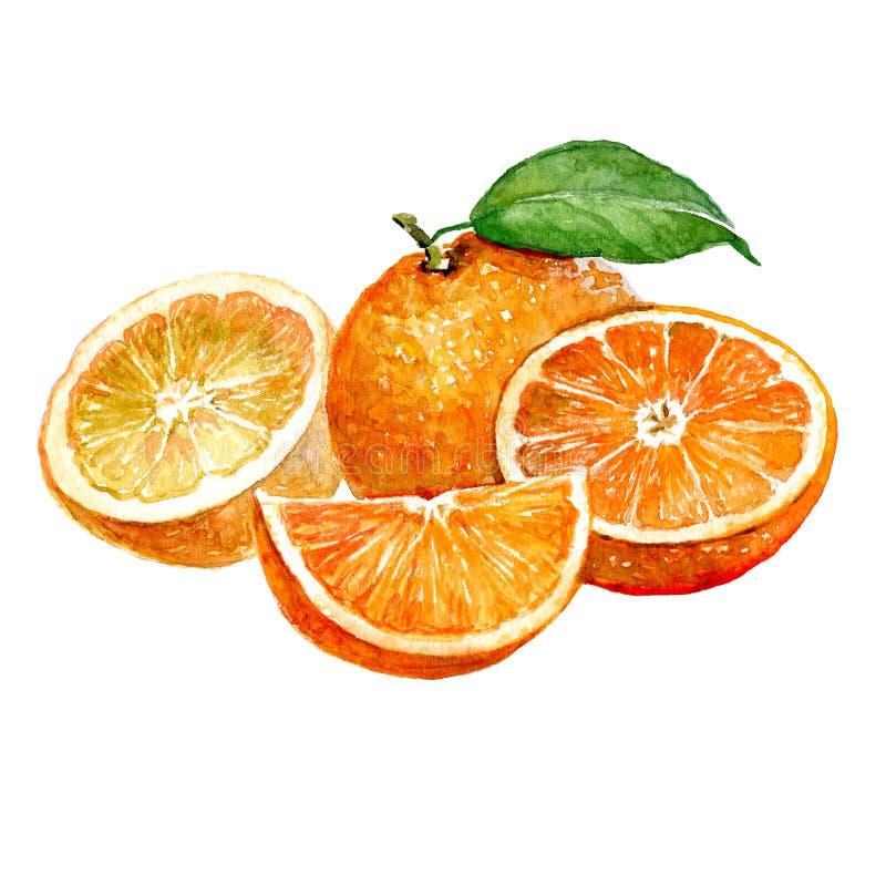 Aquarelle orange et fruit orange coupé en tranches d'isolement illustration de vecteur