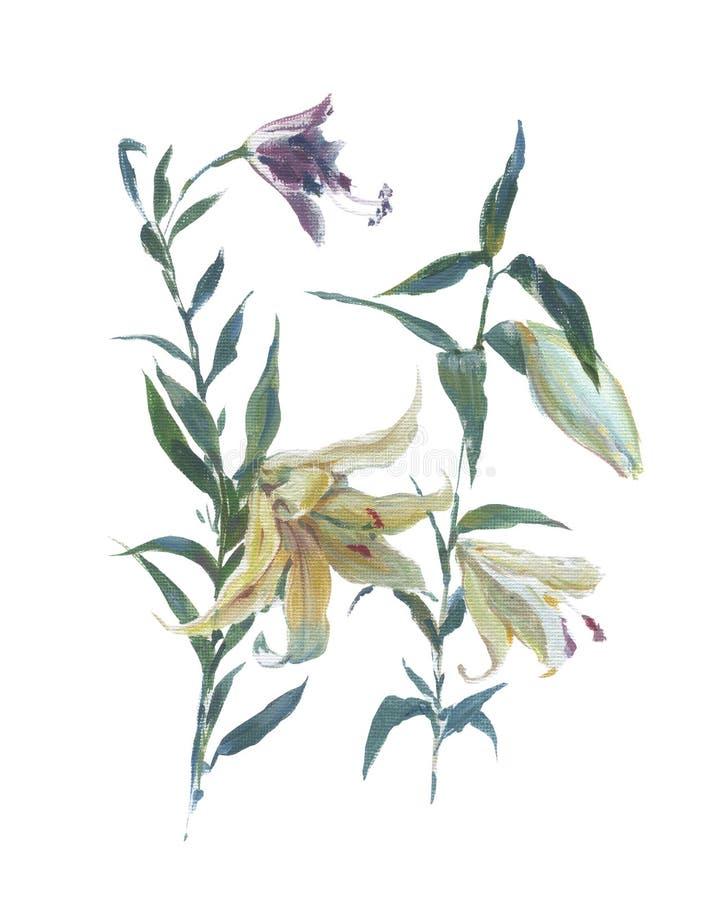 Aquarelle, peinture à l'huile des feuilles et fleur, sur blanc illustration libre de droits
