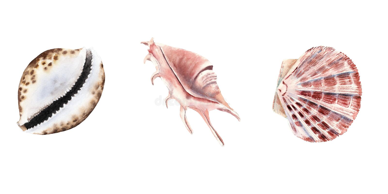 aquarelle réglée avec des coquilles d'isolement sur le blanc illustration stock