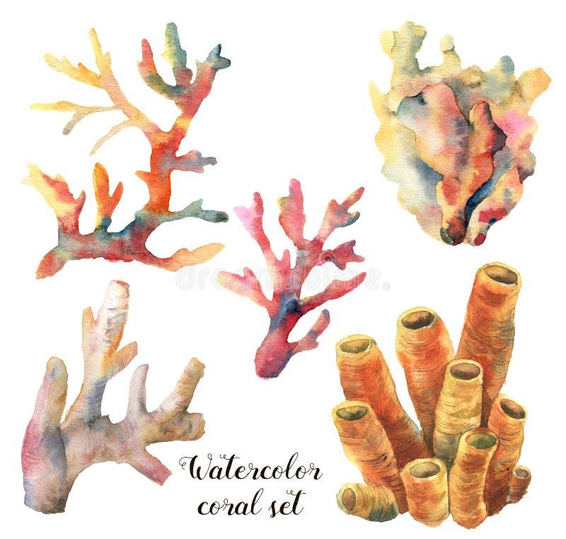 Aquarelle réglée avec des coraux Branches sous-marines peintes à la main d'isolement sur le fond blanc Durée de mer tropicale illustration libre de droits