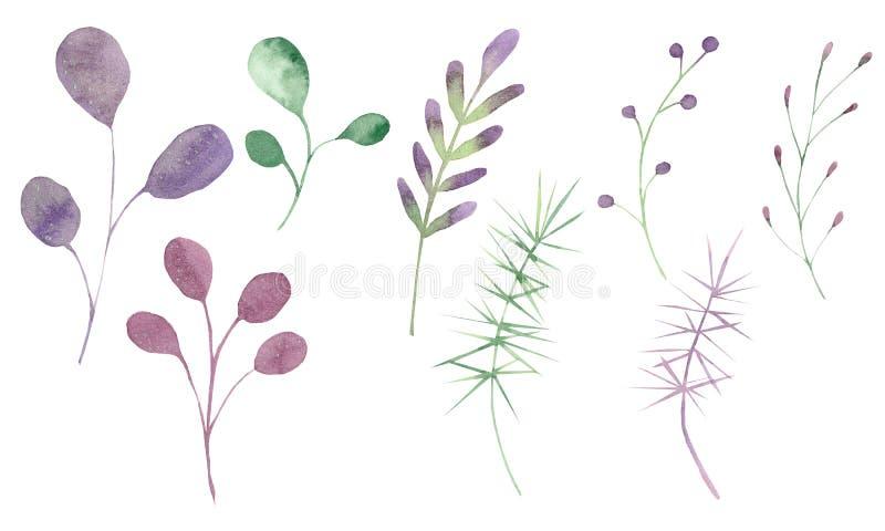 Aquarelle réglée avec des feuilles et des branches sur un fond blanc illustration stock