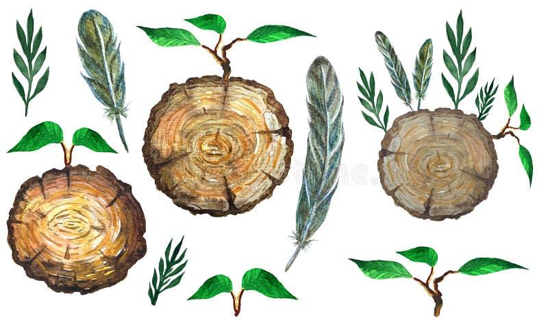 Aquarelle réglée avec la section de tranche de l'arbre, des feuilles, des plumes et de la branche illustration de vecteur