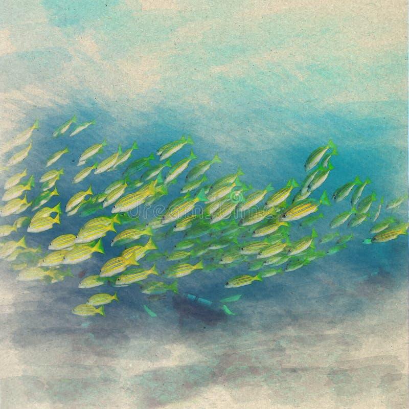 aquarelle sous-marine o d'océan d'espèce marine de paysage marin de yellowsnapper illustration libre de droits