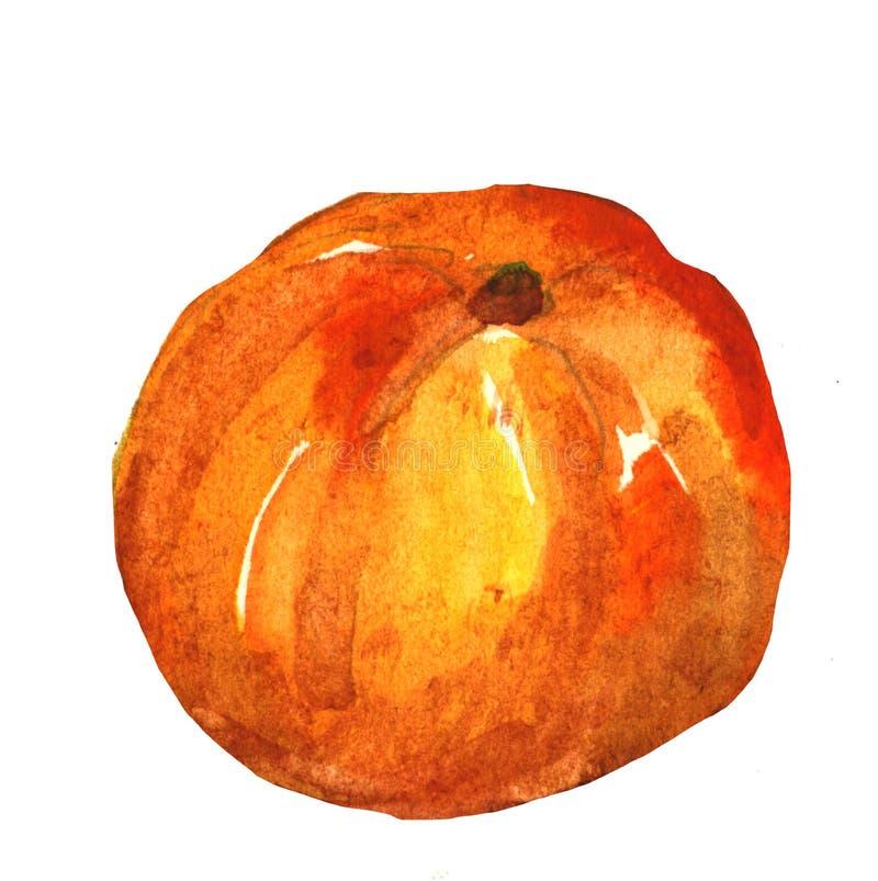 Aquarelle tirée par la main de mandarine, sur un fond blanc Illustration illustration stock