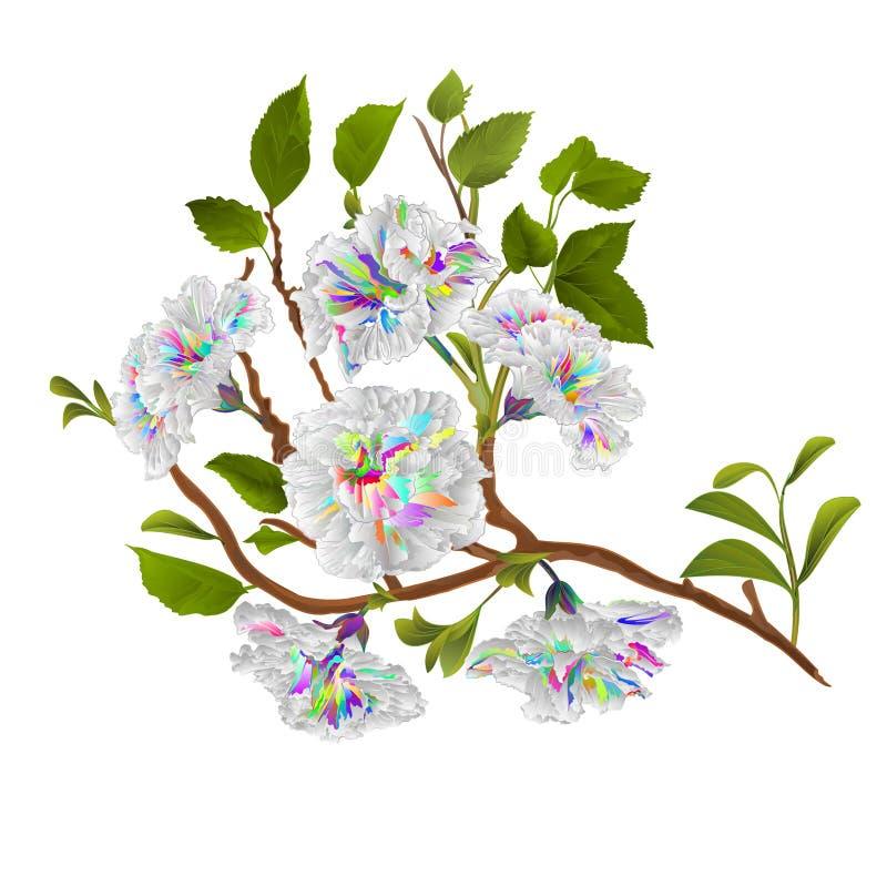 Aquarelle tropicale colorée multi de fleur de ketmie de branche sur une illustration blanche de vecteur d'aspiration de main de c illustration libre de droits