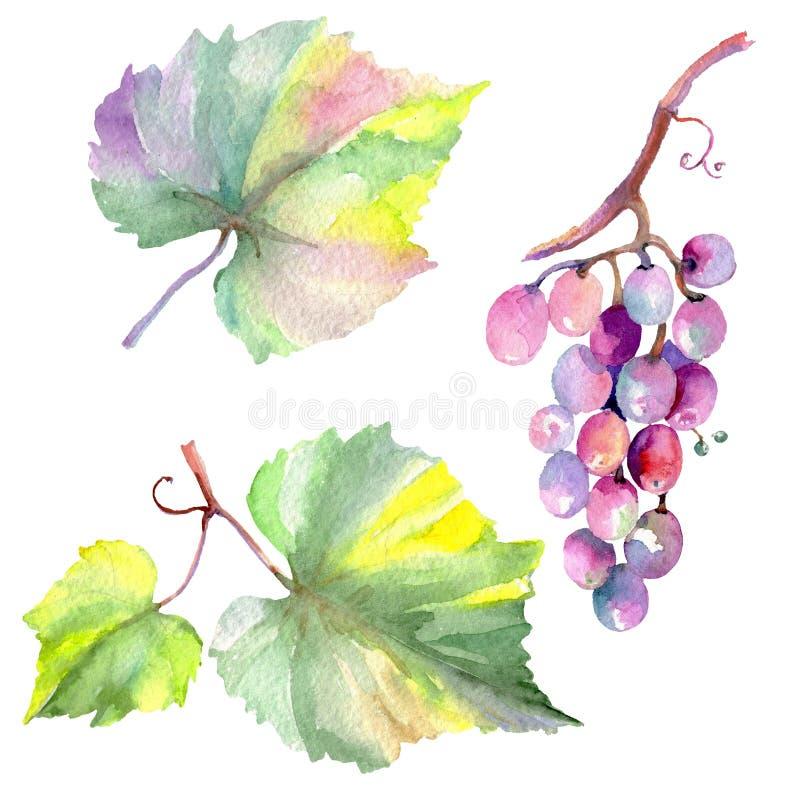 Изолированная еда ягоды виноградины здоровая в стиле акварели r Изолированный элемент иллюстрации плода иллюстрация штока