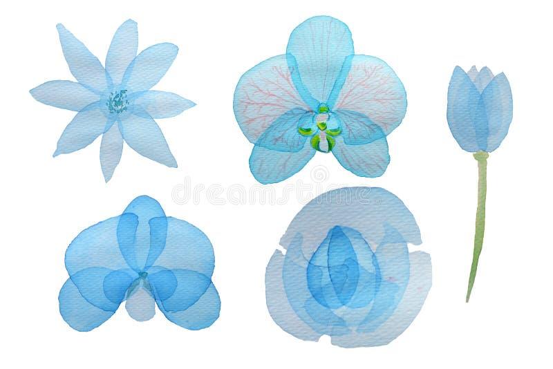 Aquarellfarbene Blumensammlung mit Blumen Blumenbestandteile für Ihre Kompositionen, Einladungen, Hochzeiten oder lizenzfreie abbildung