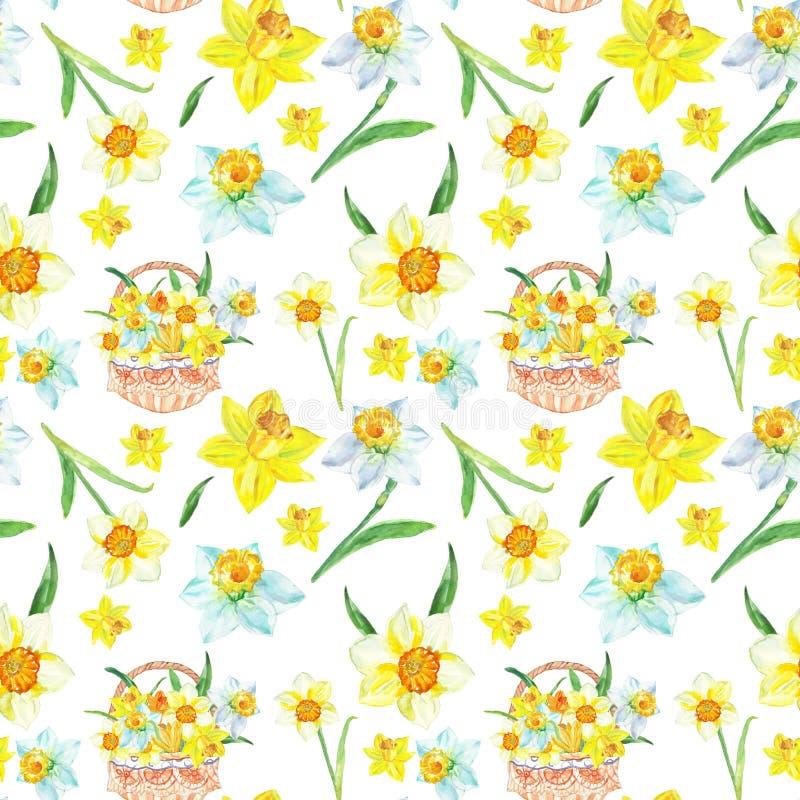 Aquarellfrühlings-Blumenmuster in den Gelbs mit Narzissenblumen auf weißem Hintergrund Botanische handgemalte Illustration stock abbildung