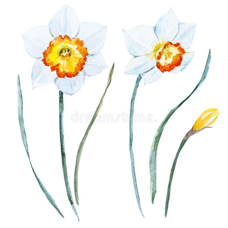 Aquarellfrühlingsblumen stock abbildung
