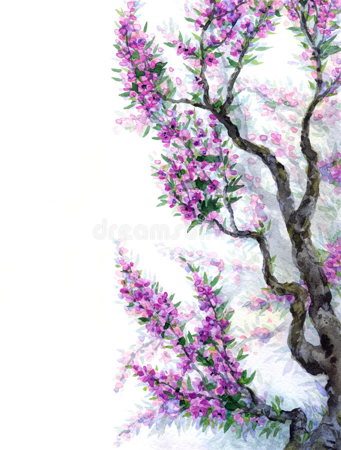 Aquarellfrühlingshintergrund Purpurrote Blumen auf Baumasten vektor abbildung