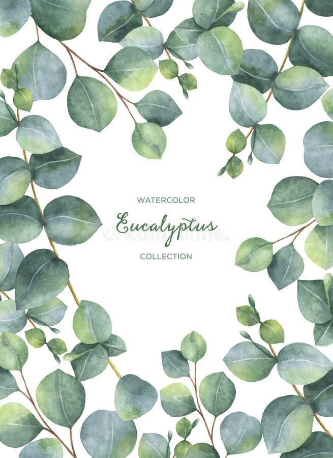 Aquarellgrüne Blumenkarte mit den Eukalyptusblättern und -niederlassungen des silbernen Dollars lokalisiert auf weißem Hintergrun lizenzfreie abbildung
