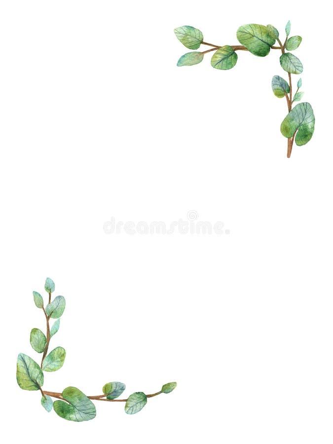 Aquarellgrüne Blumenrahmenkarte mit runden Blättern des Eukalyptus des silbernen Dollars lizenzfreie abbildung