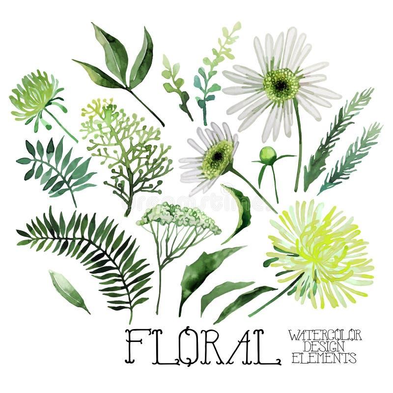 Aquarellgrüne Blumensammlung lizenzfreie abbildung