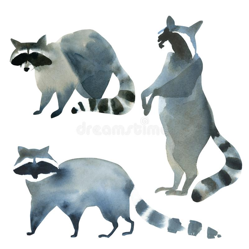 Aquarellillustration auf weißem Hintergrund Stellen Sie vom Waschbären ein Einfache Skizze von wilden Tieren stock abbildung