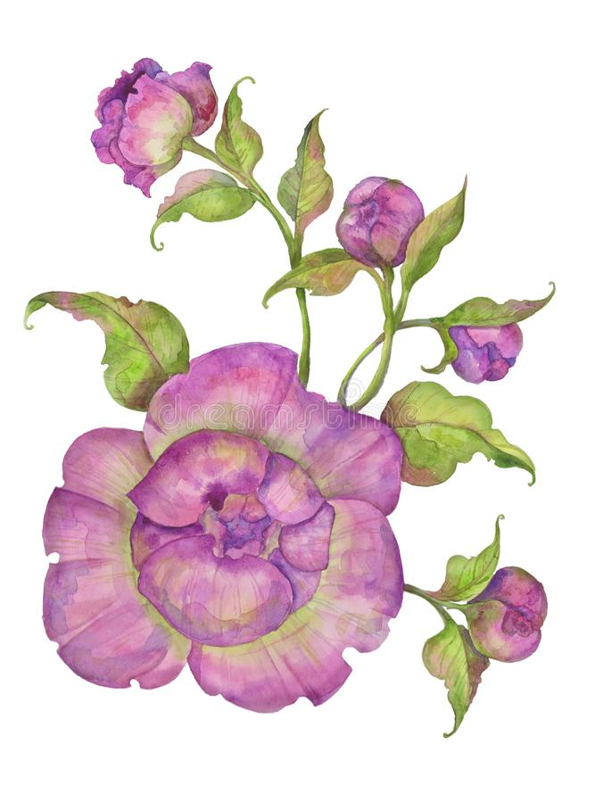 Aquarellillustration, Blumenstrauß von Pfingstrosen mit Blättern und Knospen vektor abbildung