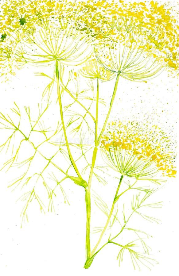 Aquarellillustration der Dillniederlassungsnahaufnahme Getrennt auf weißem Hintergrund lizenzfreies stockbild