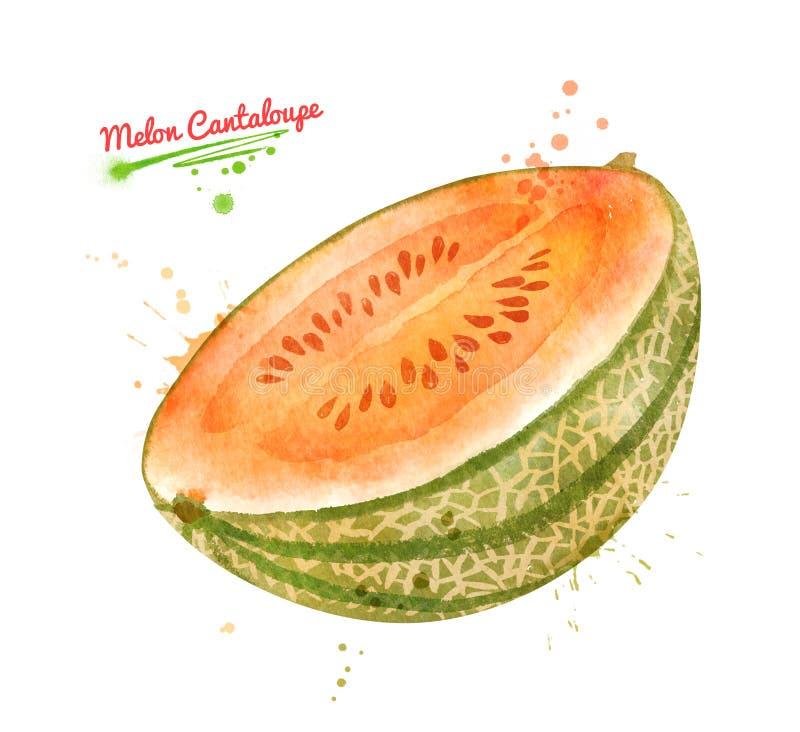 Aquarellillustration der Hälfte von Melonen-Kantalupe frui stock abbildung
