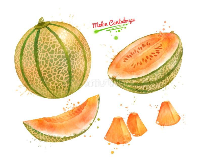 Aquarellillustration der Melonen-Kantalupe stock abbildung
