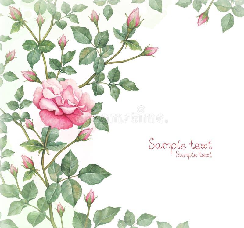 Aquarellillustration der rosafarbenen Blume stockfotografie