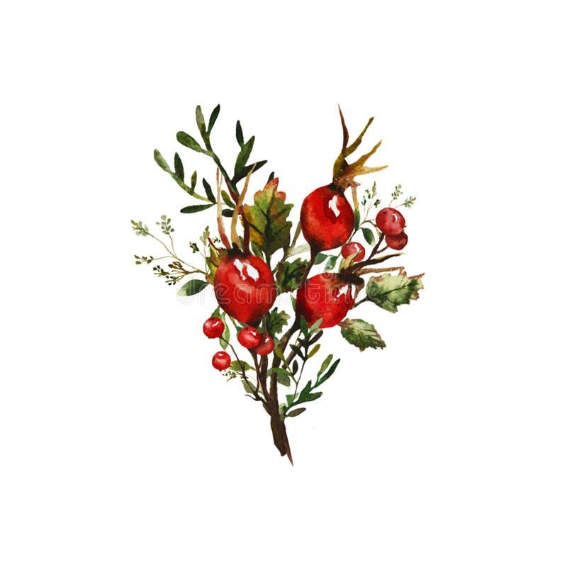 Aquarellillustration einer Niederlassung der wilden Rose lizenzfreie abbildung