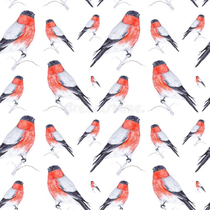 Aquarellillustration eines Dompfaffvogels, der auf einem Zweig lokalisiert auf wei?em Hintergrund sitzt Nahtloses Muster stock abbildung