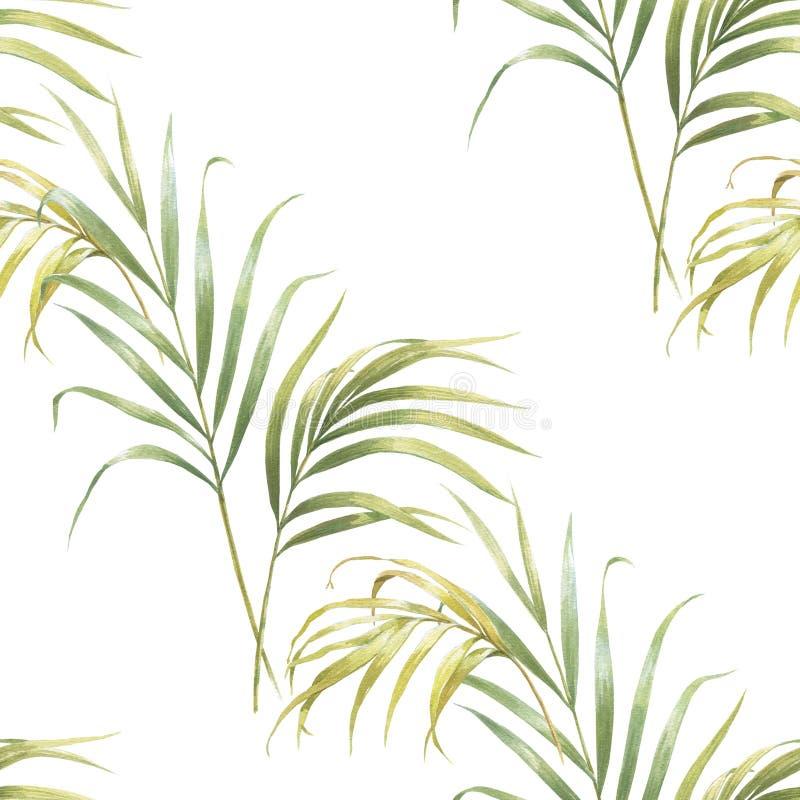 Aquarellillustration von Kokosnusspalmblättern, nahtloses Muster auf Weiß lizenzfreie abbildung