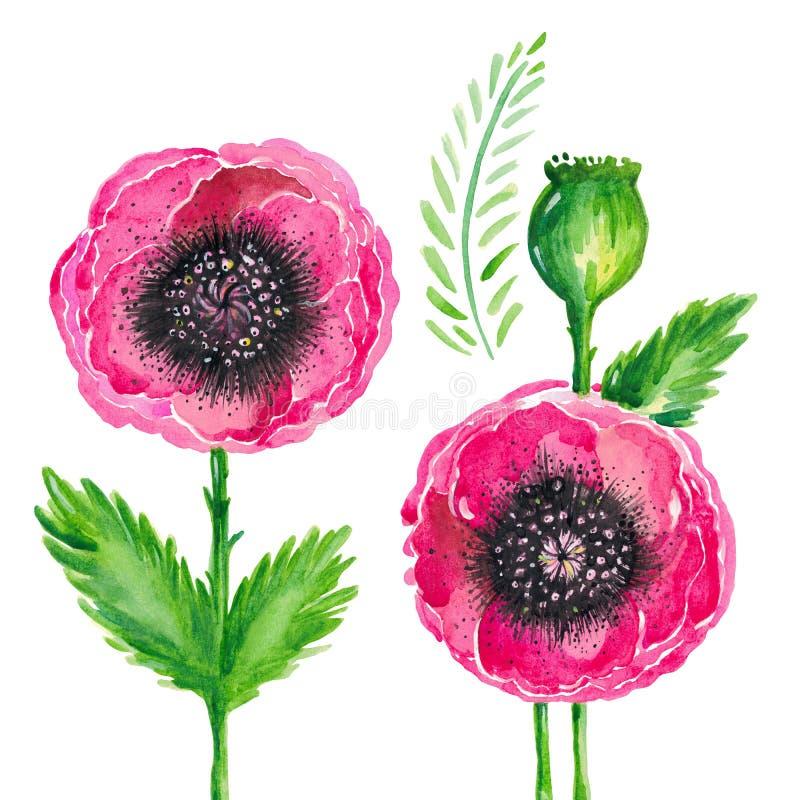 Aquarellillustration von roten blühenden Mohnblumen halten Grün lässt Blumensatz auf weißem Hintergrund auf vektor abbildung