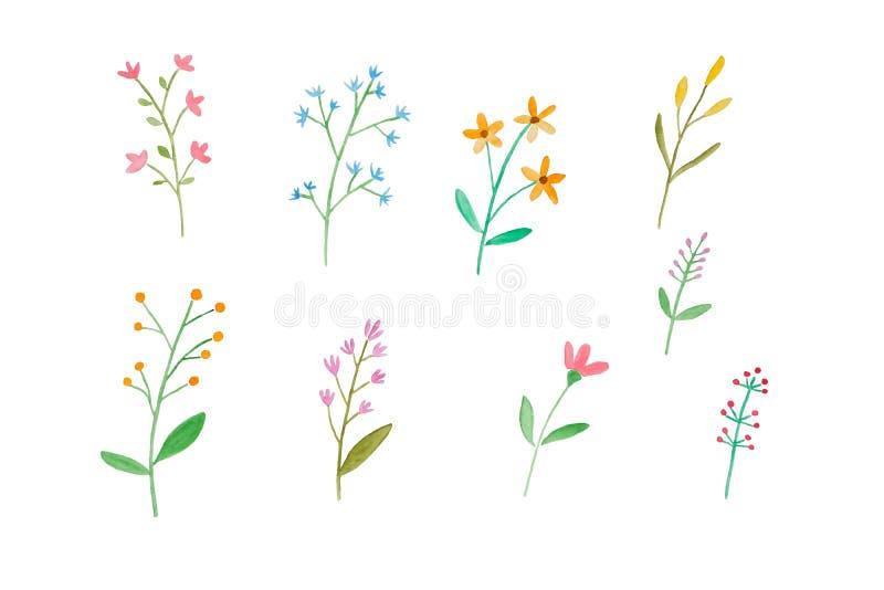 Aquarellillustrations-Kunstentwurf, stellte von den bunten Blumen in Aquarellhand-pianting Art lokalisiert auf weißem Hintergrund lizenzfreie abbildung