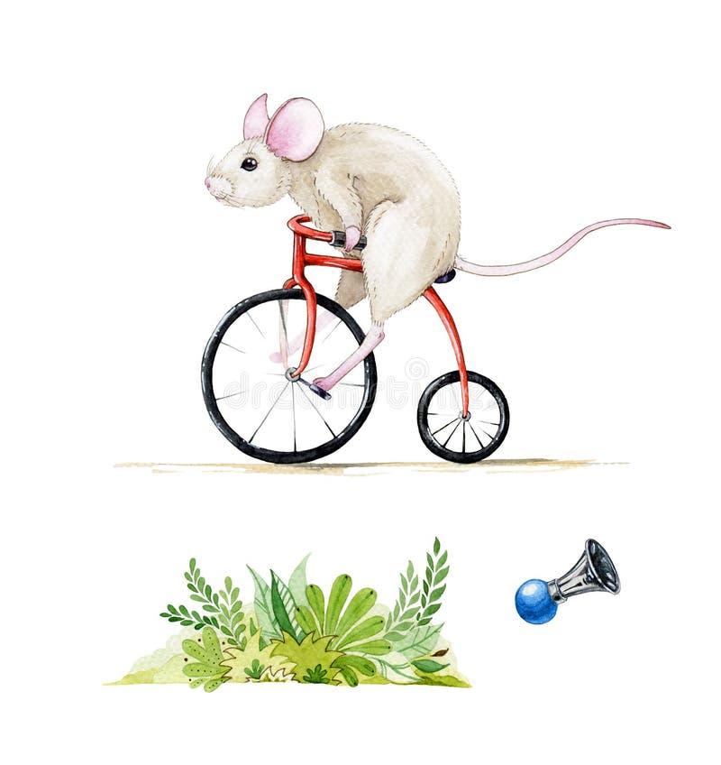 Aquarellillustrationssatz einer Maus, die ein rotes Fahrrad reitet Handgezogener Watercolour stellte von einer Ratte ein, lokalis lizenzfreie abbildung