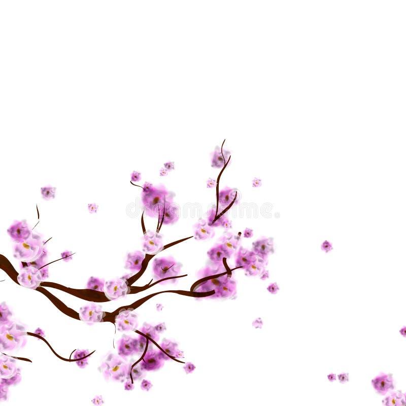 Aquarellkirschblüte-Hintergrund mit Blütenkirschbaumniederlassung stock abbildung